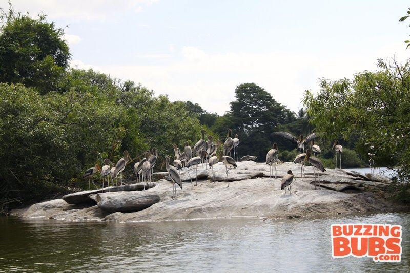 Ranganthitu-BirdView