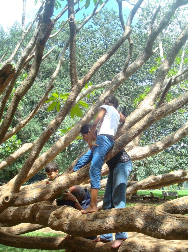 lalbagh botanical garden, climbing